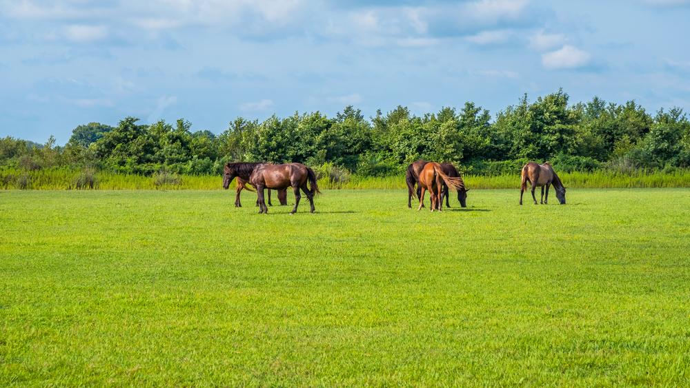 Equestrian Property 3